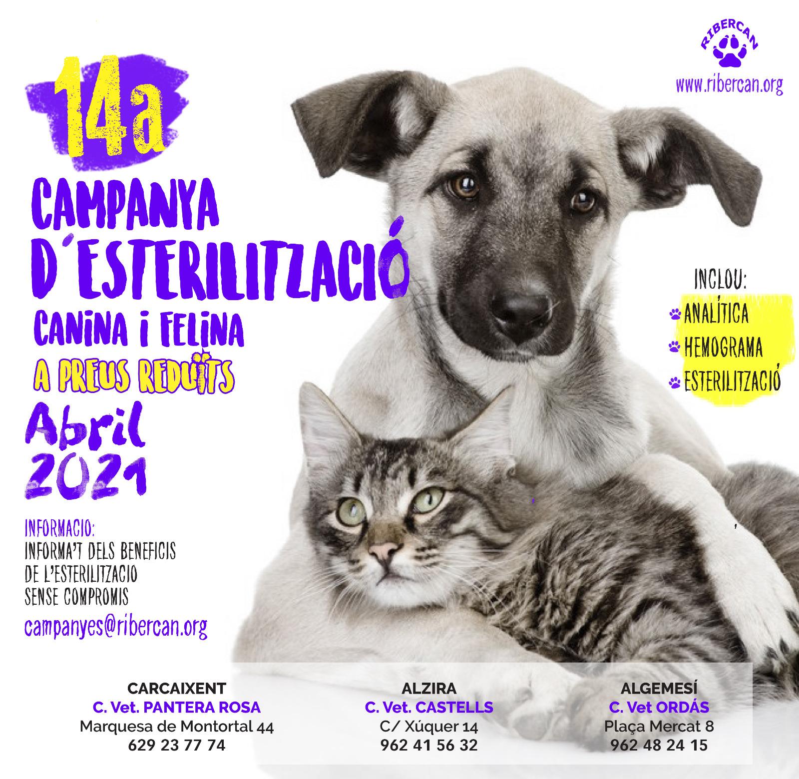 cartel campaña esterilización