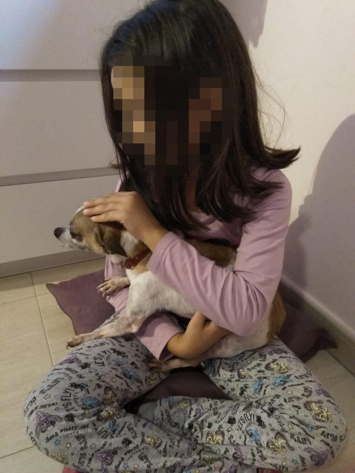 perro en adopcion valencia